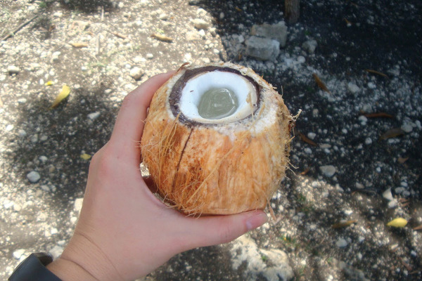 Feature_Haiti_Coconut