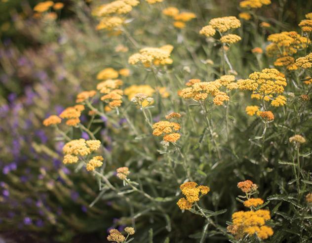 Flowers in the East Baltimore garden run by Melinda Walker